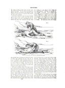 Strona 263