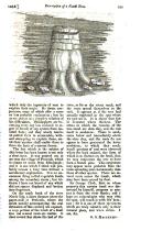 Strona 539