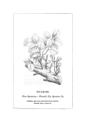Strona 467