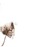 Strona 443